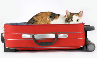 Bs_Spotted_Cat_In_The_Suitcase_I_4739466