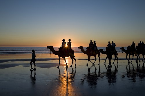 Camels on Broome Beach